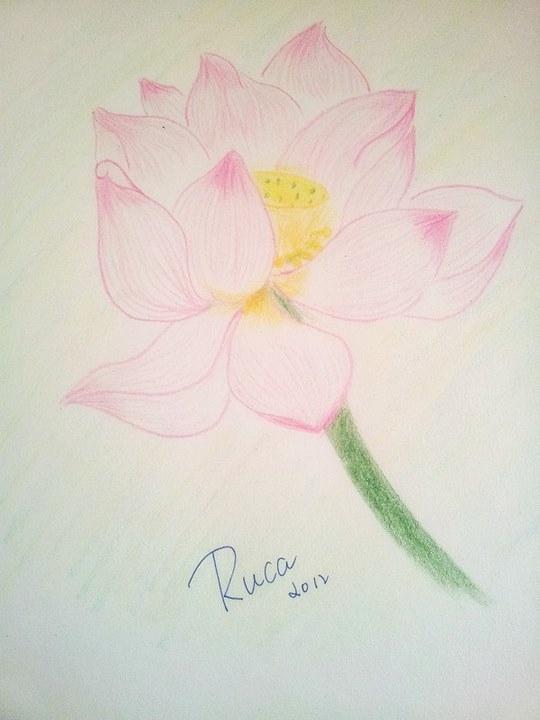 谁能发一幅彩铅画的荷花图片,画的要漂亮,简单一点.图片