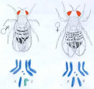 Xy型性别决定的生物 y染色体都比x染色体短小 这句话