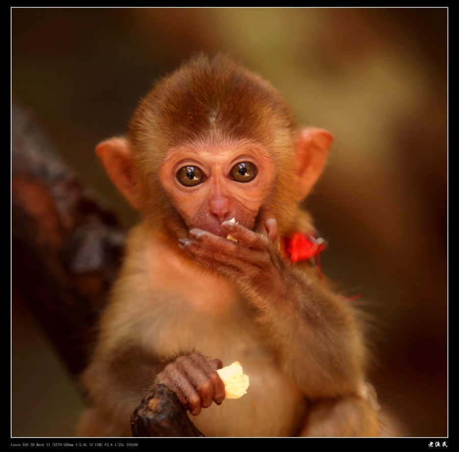 可怜的小猴子(共5p); 可怜的小猴子(保护动物)图片
