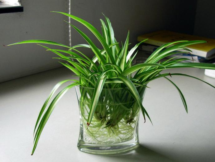 水培植物放什么好