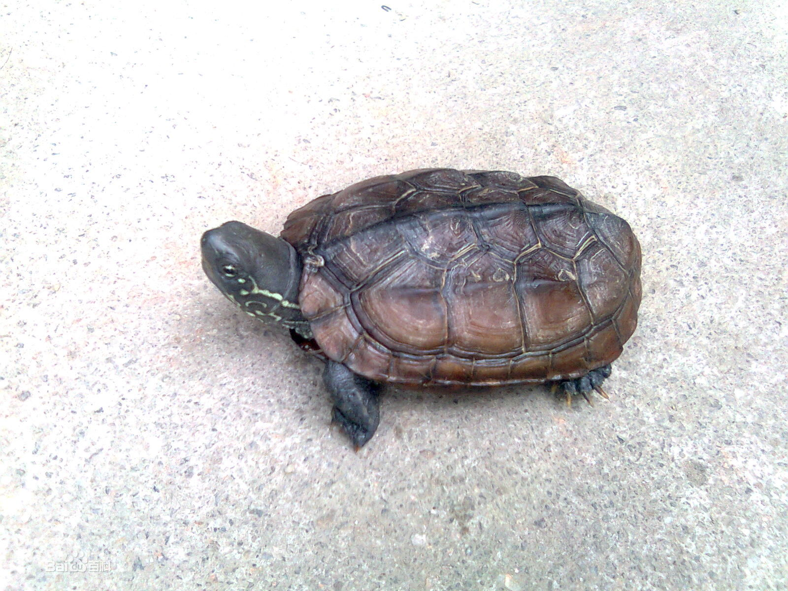 乌龟的饲养方法 家养乌龟的饲养方法 乌龟的饲养方法视频