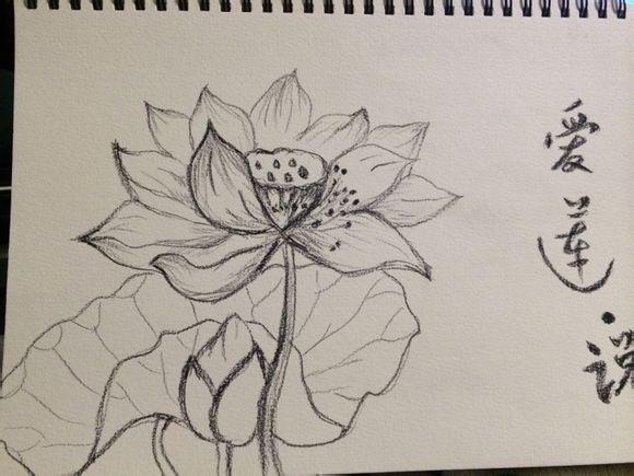 手绘荷花图片铅笔画