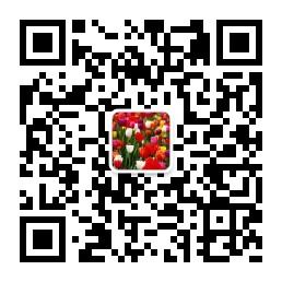 洛阳郁金香花园花期