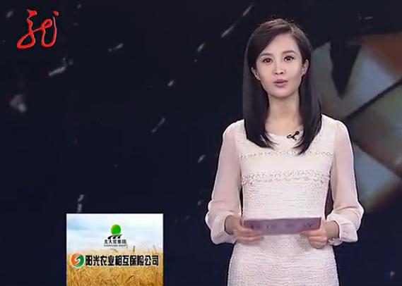 这位美女主持人是谁?黑龙江电视台的