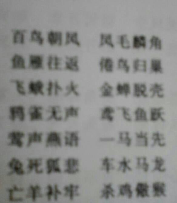 汉语动物名称的四字词语图片