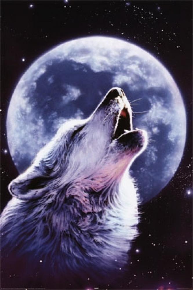 梦到了狼,在我做梦的意识里是狼那为什么看到了确是一只牧羊犬,怕他咬