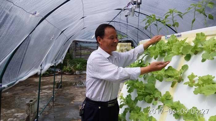 盆栽种菜怎么施肥