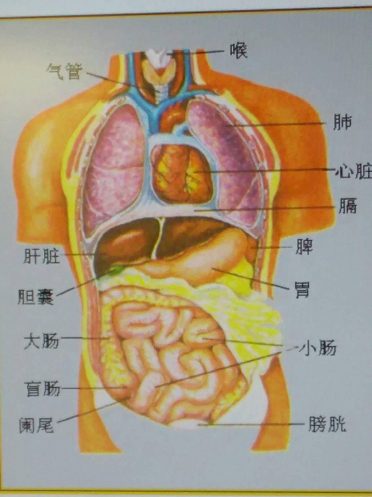 心脏疼痛是怎么回事,右边胸口疼是什么原因,心脏在左边还是右边图图片