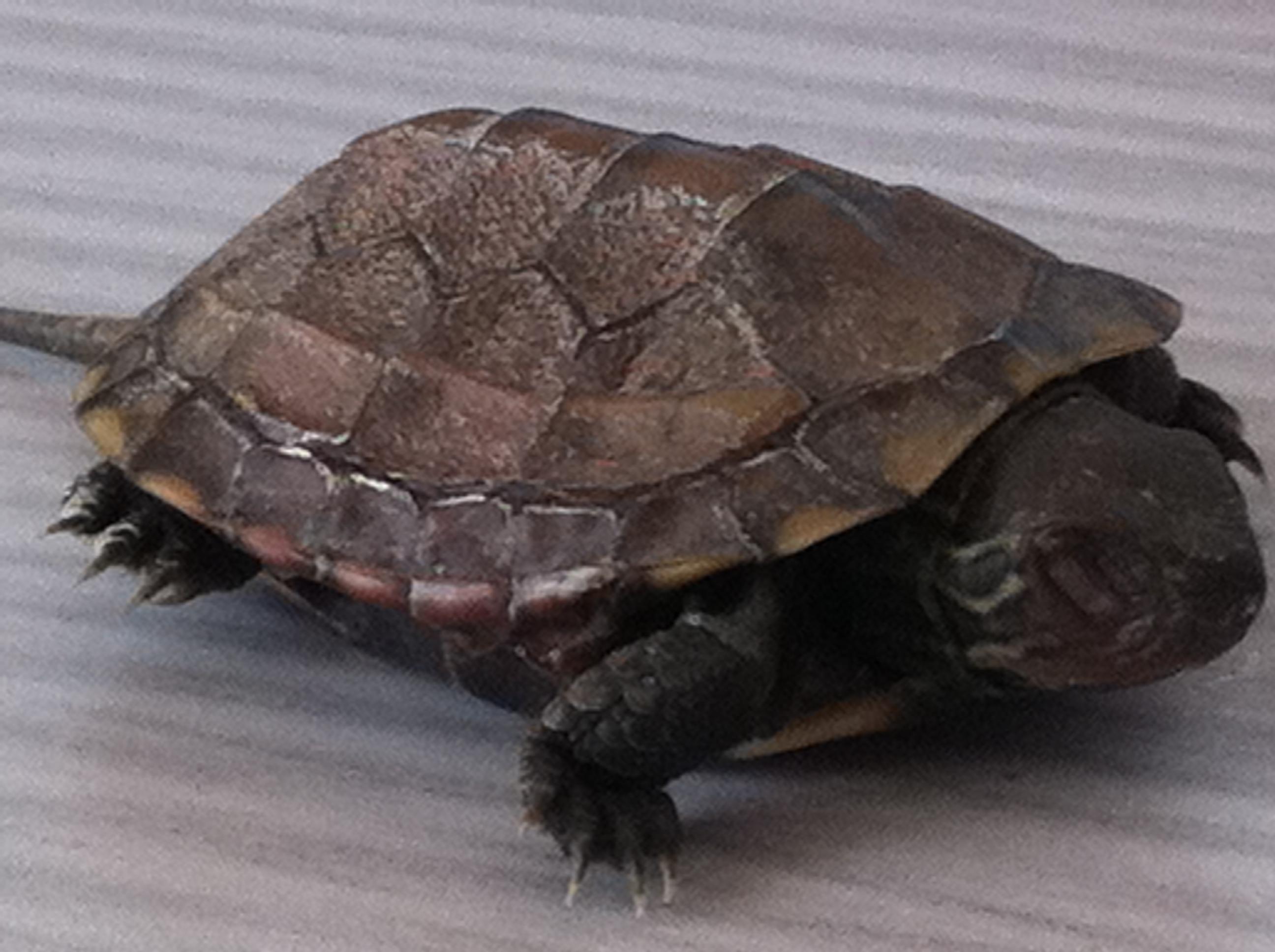 请问乌龟冬眠是一动不动吗?-最新小龟,黄小龟主演,怎么养一只小