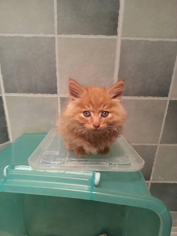 这是什么品种的猫图片
