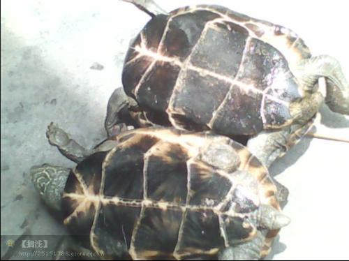 这是什么龟