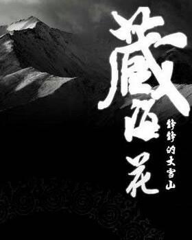 藏海花2全集