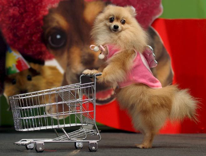 tizi0722 二级 去宠物市场
