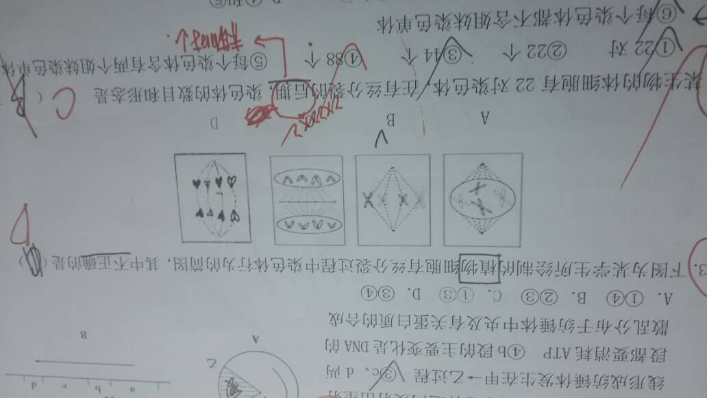高中函数题,d项错了,。b生物中用抽象盐酸高中函数图片