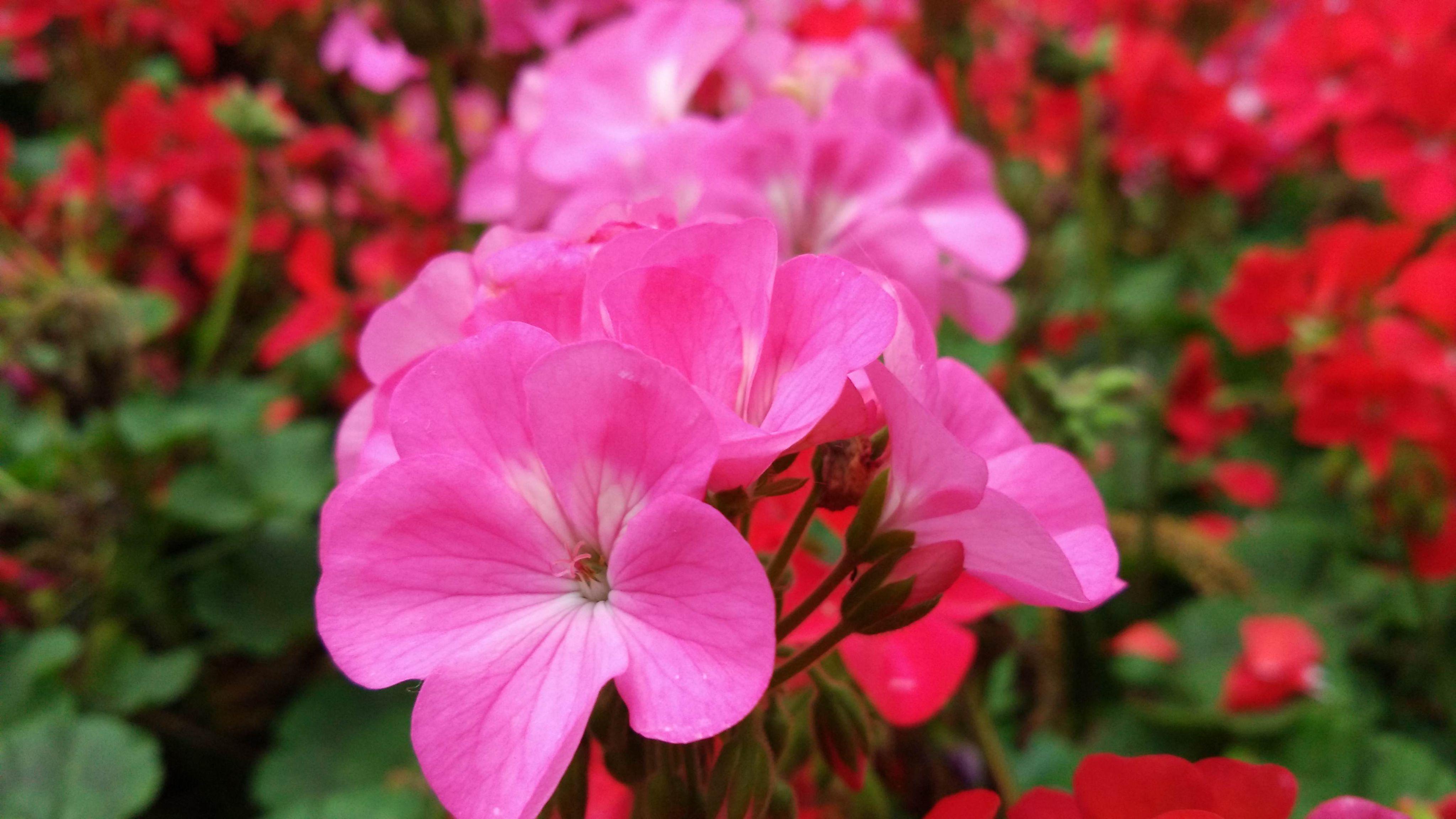 告诉我一些花的名字和它包含的含义 花语