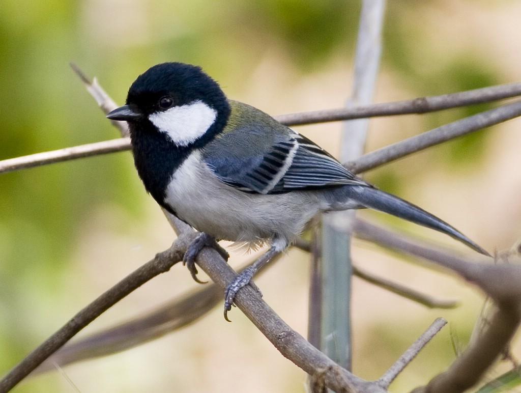 无意间救了这个小家伙 请问这是什么鸟?小伙伴们帮忙看一下!