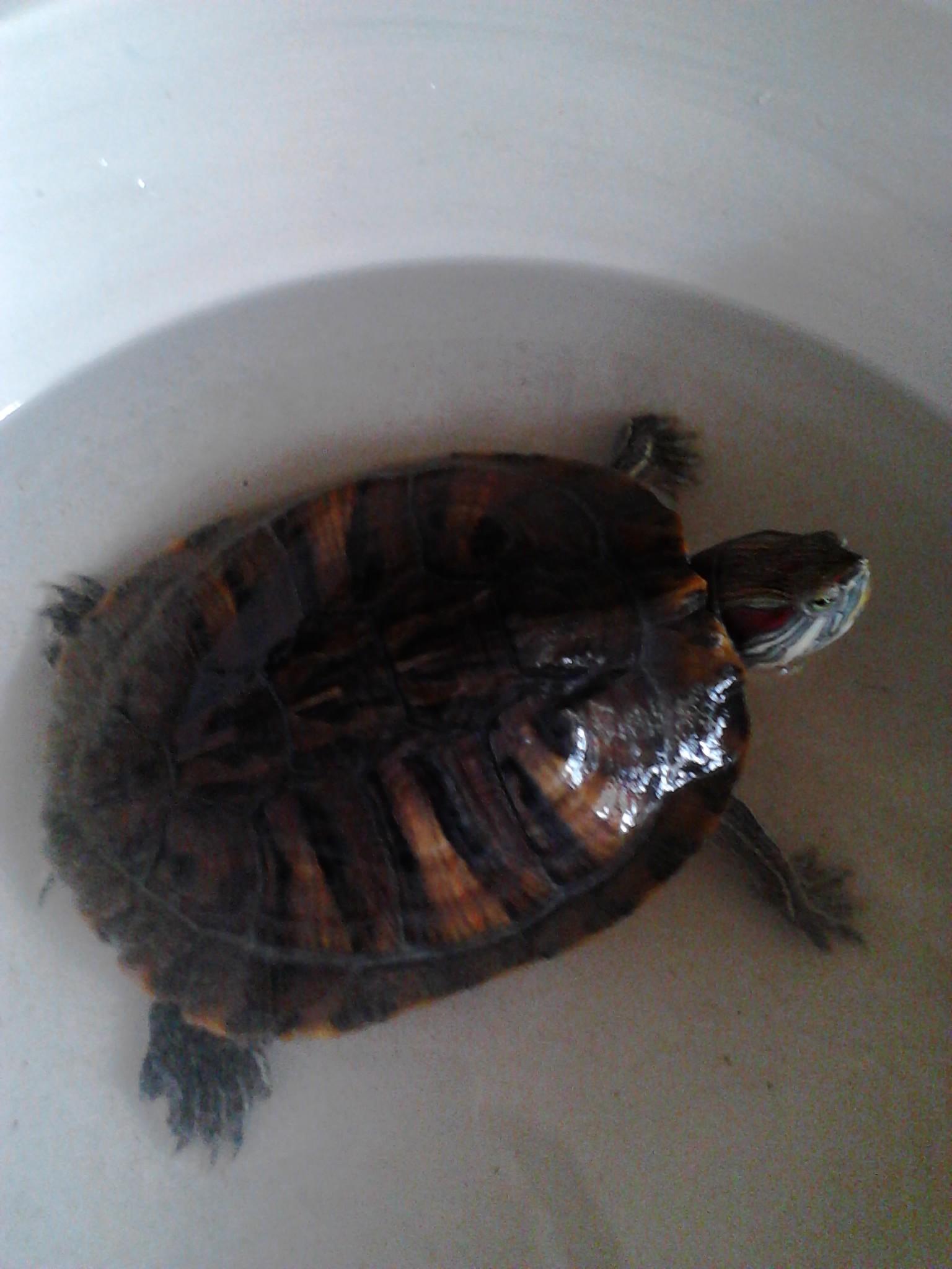 眼病要怎么治,乌龟有手掌那么大