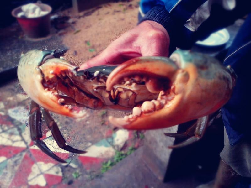 螃蟹疼吗?思考吗