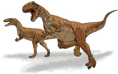 斑龙的物种发现