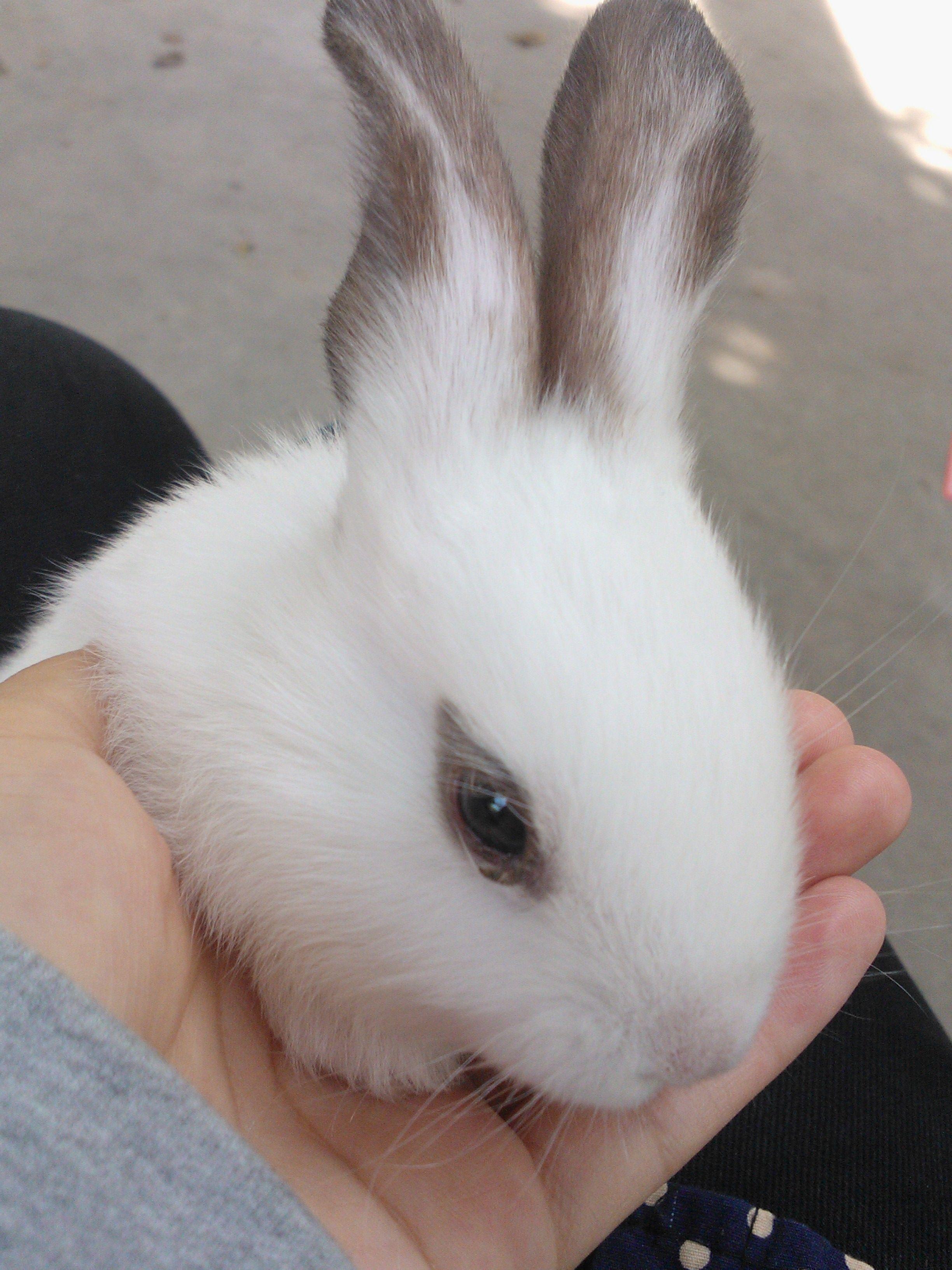 求还是谢谢这只大神是成兔兔子幼兔,急求!分辨!贵鱼好吃狗鱼还是好吃图片
