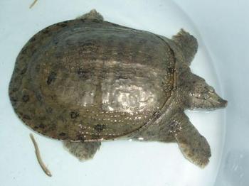 ,乌龟跟王八怎么区别,王八和鳖的区别