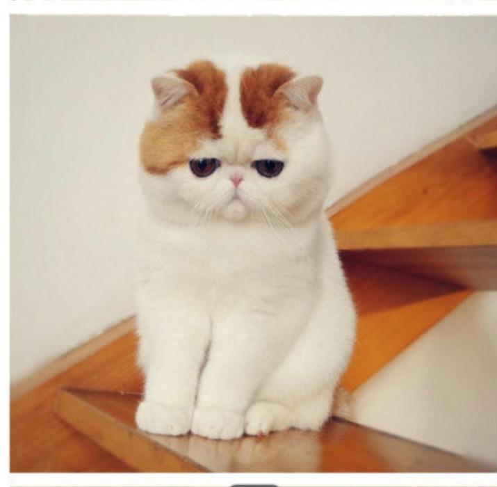 【不懂就问】请问这只网红猫的名字,想搜他的表情包.图片