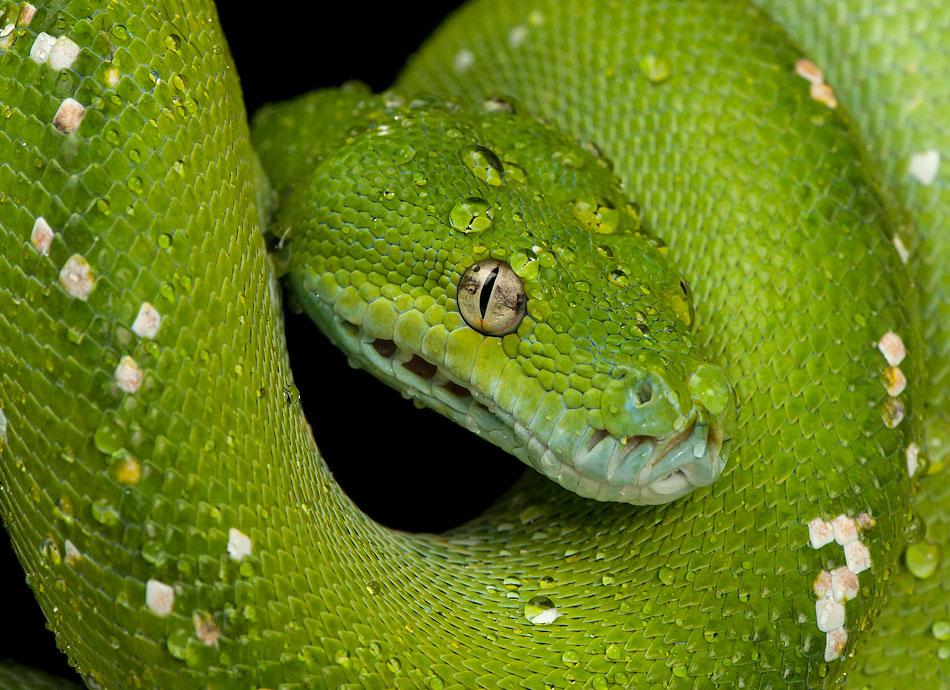 做梦梦到蛇是什么意思_怀孕的老婆昨天晚上做梦梦到蛇有什么意思?她最怕蛇了