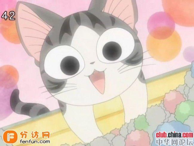 甜甜私房猫又名甜甜起司猫.图片