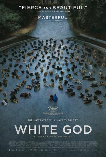 白色上帝狗什么品种