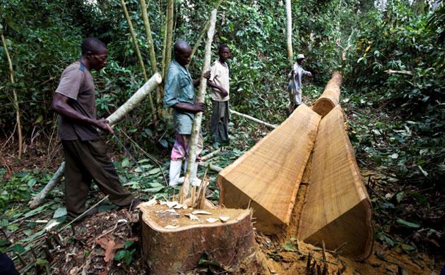 森林采伐更新管理办法的森林采伐更新管理办法图片