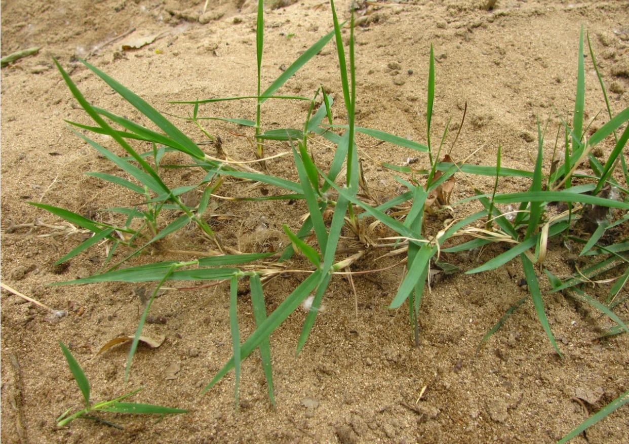 植物的茎同特征是什么