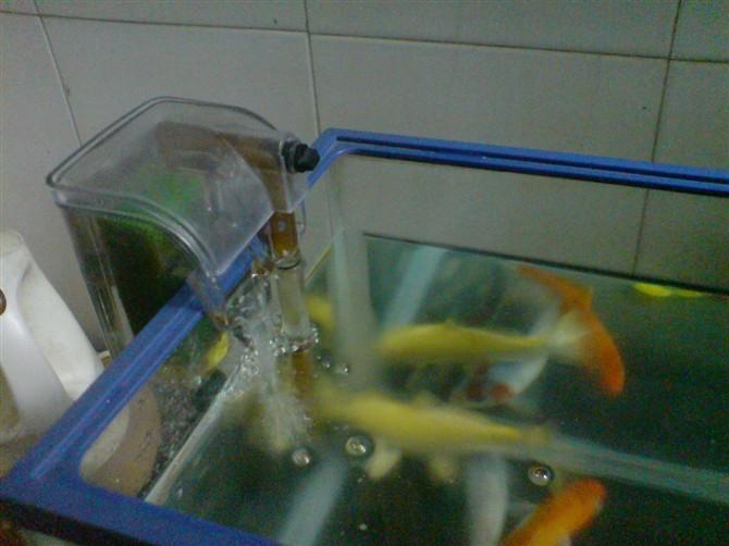 15cmx18cmx12cm的小鱼缸 如何设计过滤系统.