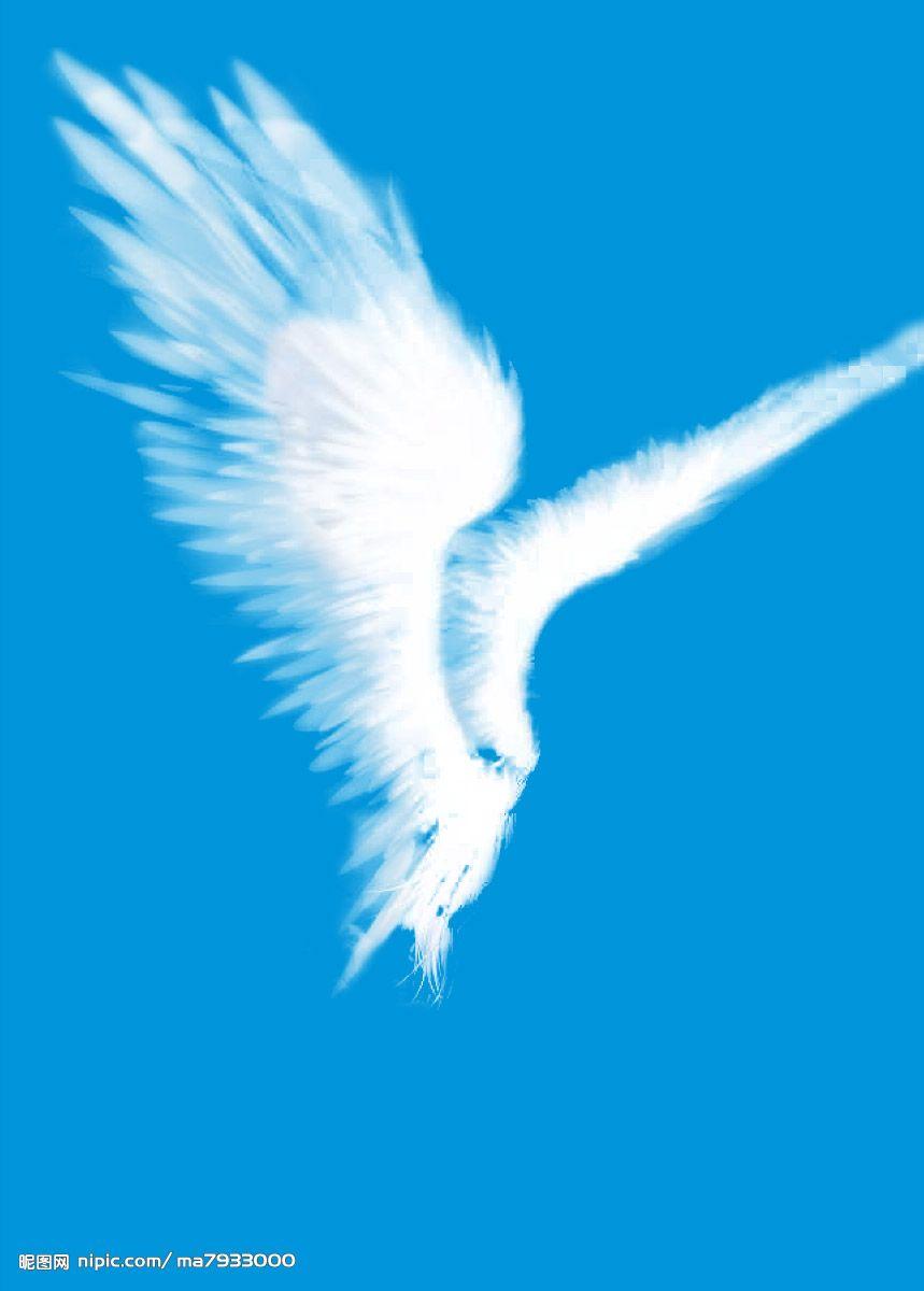 翅膀;; 天使的三滴眼泪   玉兰树下; 嘀咕图片图片