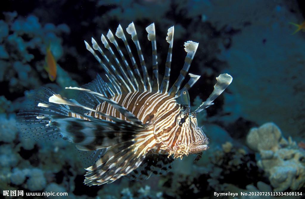 求几种海洋鱼类的名字!急!图片
