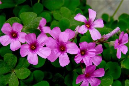 多年生长绿花卉有哪些
