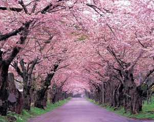 秋季去日本旅游攻略