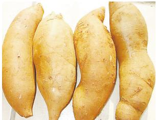 雪莲果和番薯的区别