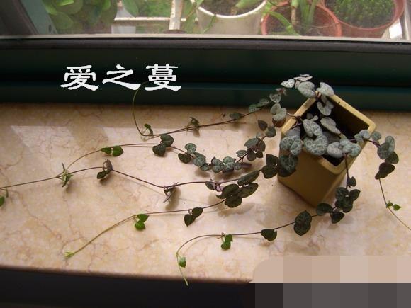 广州多肉夏天怎么浇水