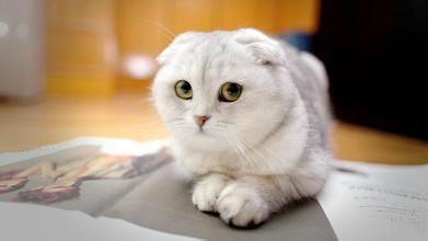 这是什么猫咪 急!给好评!图片