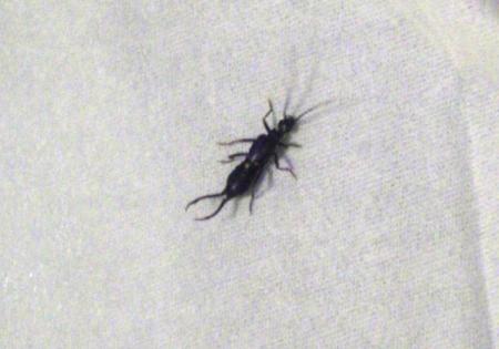 求助这个虫子的名字