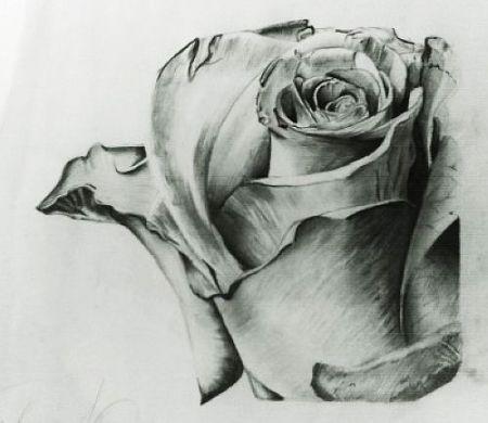 素描玫瑰花束在简单背景 背景图片
