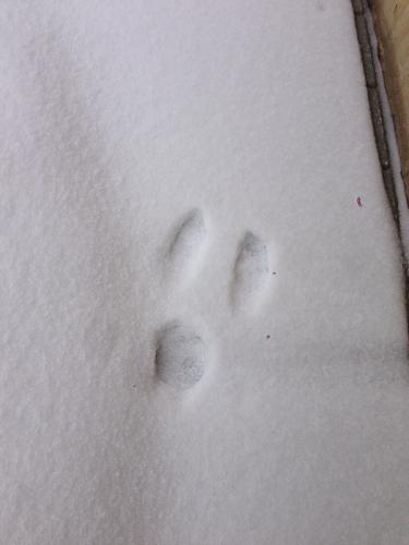 拍照秒答 兔子的 穹妹丶p1k 2014-10-26 相关问题 动物的脚印像什么?图片