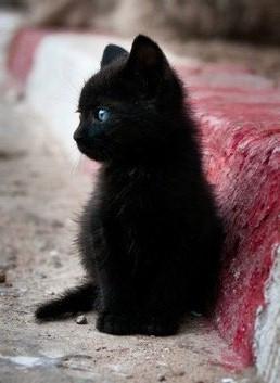 有没有人见过这样的蓝眼睛的黑猫啊图片