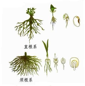 急需大豆植物成长组图图片