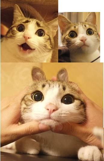 瓜皮猫表情包下载图片