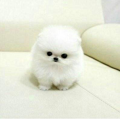知道这只狗狗的品种 叫什么名字