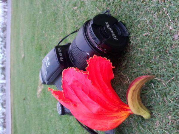 深圳湾公园里开红花的树叫什么名字