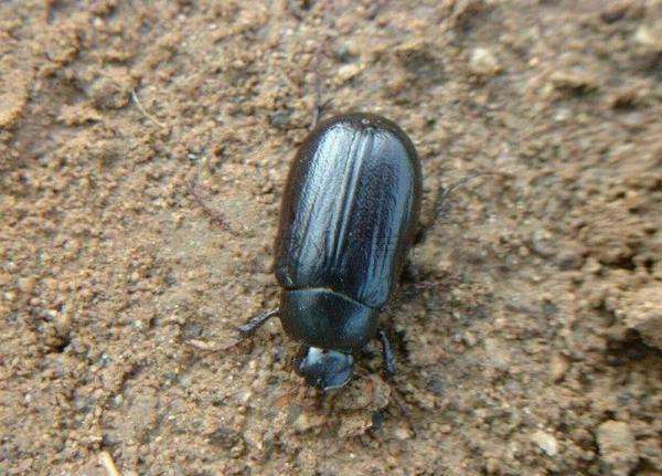 这是个什么昆虫能吃吗