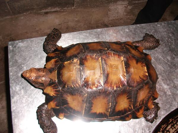 乌龟怎么辨别品种和年龄