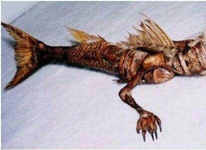 真正的美人鱼长什么样